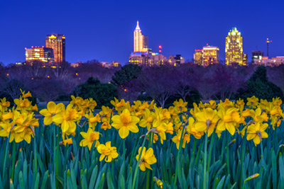 Dorothea Dix Park Daffodils and Raleigh Spring Scenes