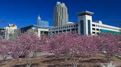 Springtime in Raleigh – 2011