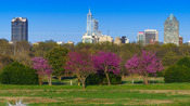 Downtown Raleigh in the Spring 2015