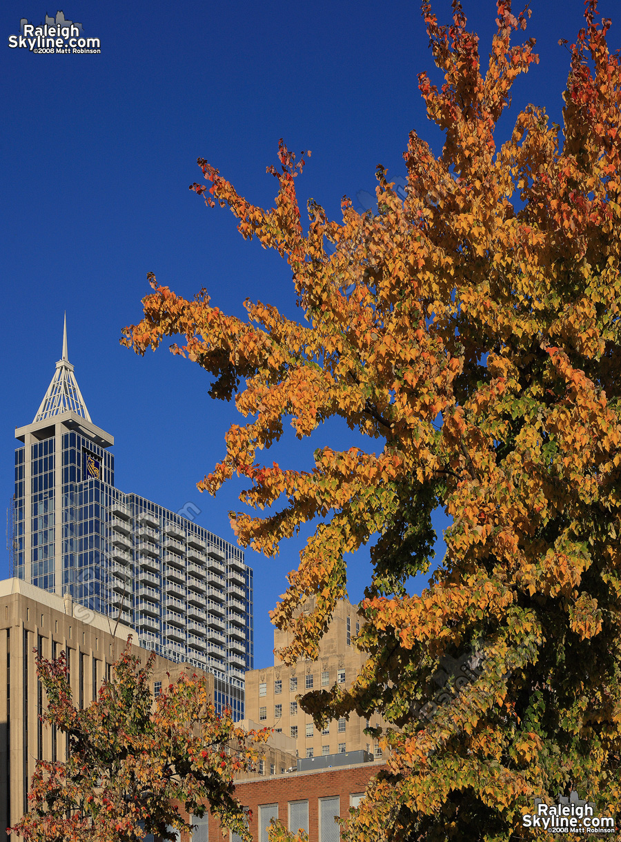 RBC Plaza with fall leaves